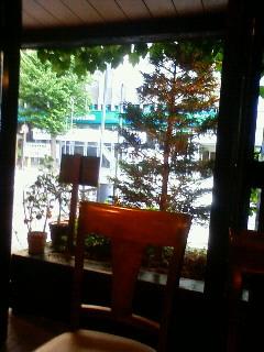 その、蔦びっしりのカフェ